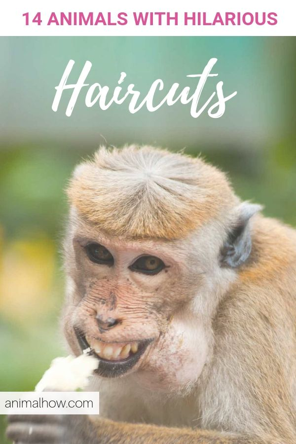 Pin On Animals With Funny Hairstyles