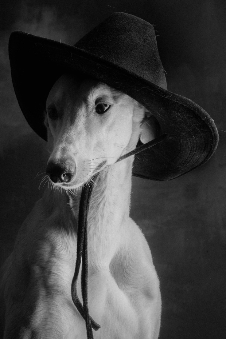 """When I run, I look so cool!"" #dogs #pets #Greyhounds…"