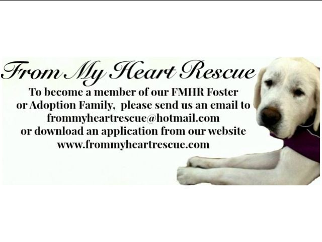 To become a member of our FMHR Foster/Adoption family, please send us an email. *To make a donation, please call our vet ~ Brock Street Animal Hospital c/o FMHR ~ (905) 430-2655 ~frommyheartrescue@hotmail.com ~www.frommyheartrescue.com ~www.petfinder.com/shelters/ON441.html ~www.facebook.com/frommyheartrescue ~www.twitter.com/FMHRnonprofit ~www.instagram.com/FMHRnonprofit