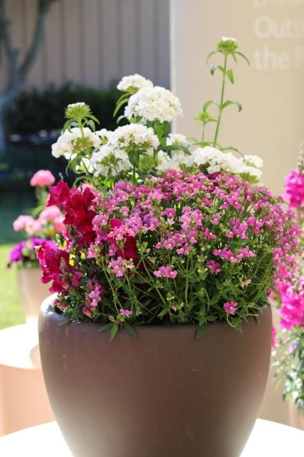 This+container+features+a+combination+of+dianthus+'Dash+White',+nemesia++'Deep+Pink'+and+snapdragon+'Solstice'.+Dianthus+'Dash+White'+is+located++in+the+back+and+has+a+great+fragrant+smell.++Nemesia+'Deep+Pink'++blooms+in+the+front+of+the+container+and+comes+in+a+variety+of+colors.++Snapdragon+'Solstice',+on+the+left,+performs+best+in+cool+weather.