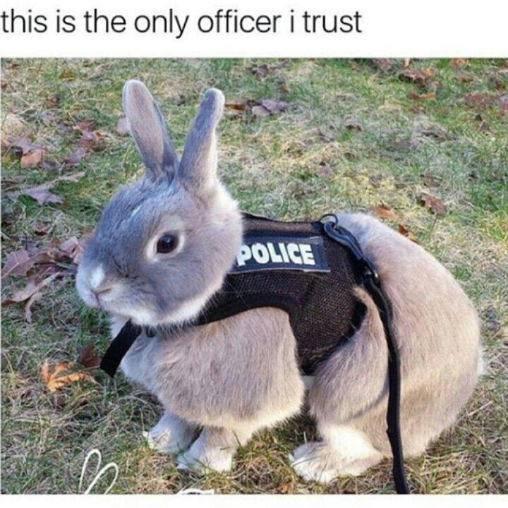 Lmao! My husband is an officer and now I need to buy him a bunny partner