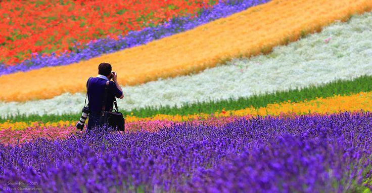 Rainbow Flower Field In Furano by Prasit Chansareekorn
