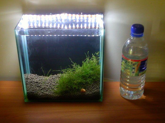 2 Gallon 1 Animals Small Aquariums