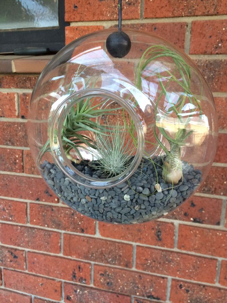 Terrarium made from a bird feeder with air plants.