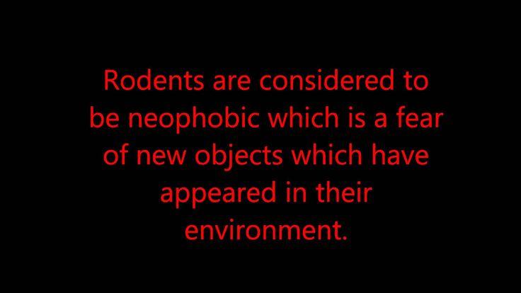 Rodnets