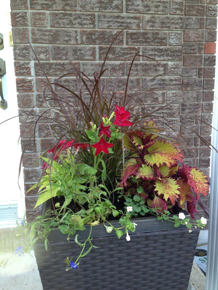 Nouvelles jardinières avant que j'ai faites ce week-end ...Red fountain grass, sweet potatoe vine, bacoba, saratoga rouge et une variété de fleurs grimpantes bleu et blanche à l'avant. Je viens de la faire donc elle est encore petite, mais c'est à parier qu'elle deviendra magnifique au cours de l'été!