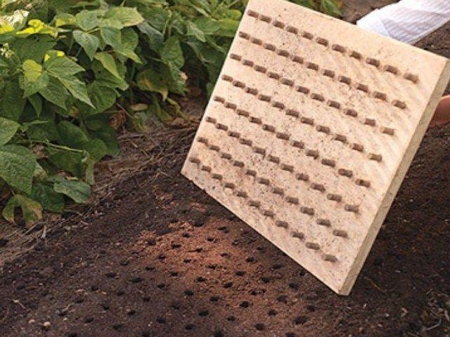 Bouchons de liège sur plaque de bois. Parfait pour les semis du potager - Source : Marthastewart.com