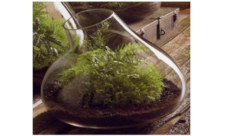 I am really liking micro terrariums - bringing living things into a living space, (or work space) that is made of non-living things, enlivens the internal landscape of your personal, physical environment.