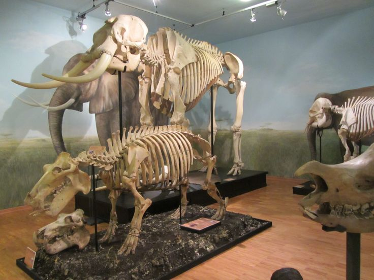 Il museo di storia naturale di Trieste