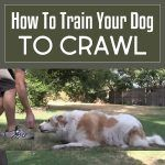 How To Train Your Dog To Crawl!