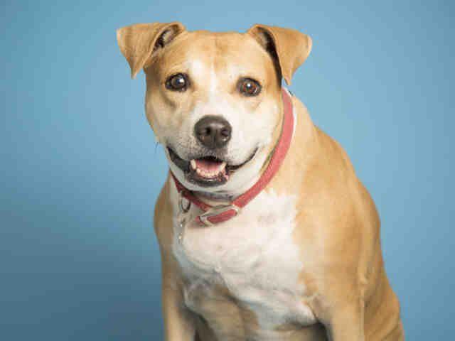 Adopt A Dog Puppy Adoptions Puppy Adoption Dog Adoption Humane Society