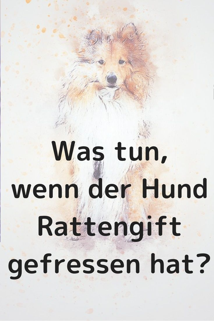 Hund Hat Rattengift Gefressen