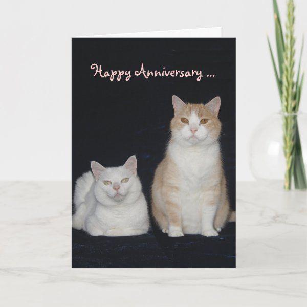 Funny Cats Anniversary Card Zazzle Com Anniversary Cards Funny Cats Funny Cat Photos