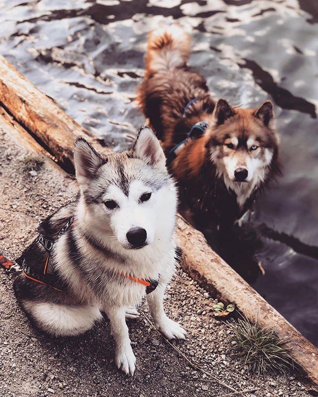 Bershebas Sharooz Hunderassen Hunde Windhund
