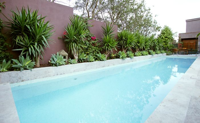 1000 images about pool landscaping on pinterest pool Best plants for around swimming pools