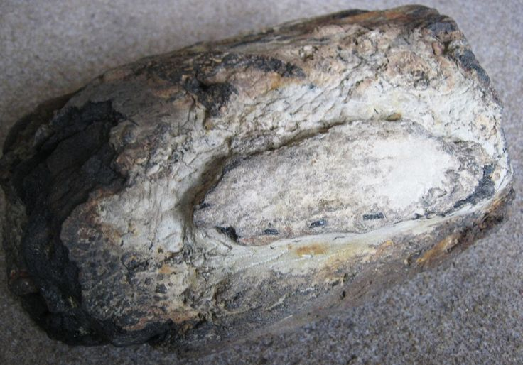 Partially prepped, skull fragment ????