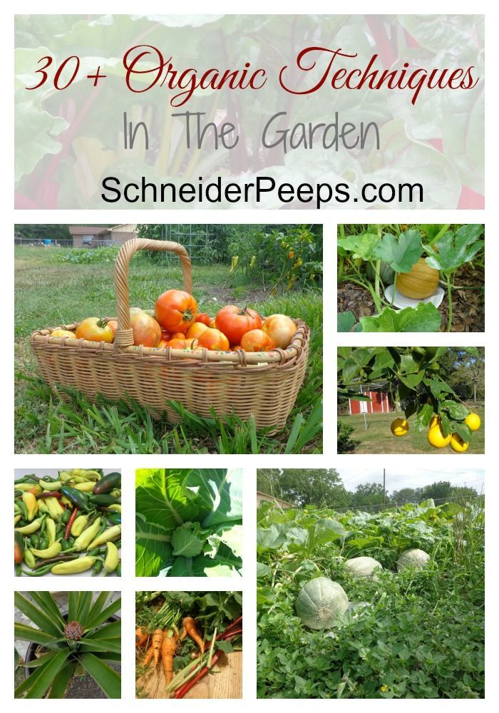 SchneiderPeeps - In the Garden. Over 30 organic techniques for growing fruits, vegetables and herbs for your family.