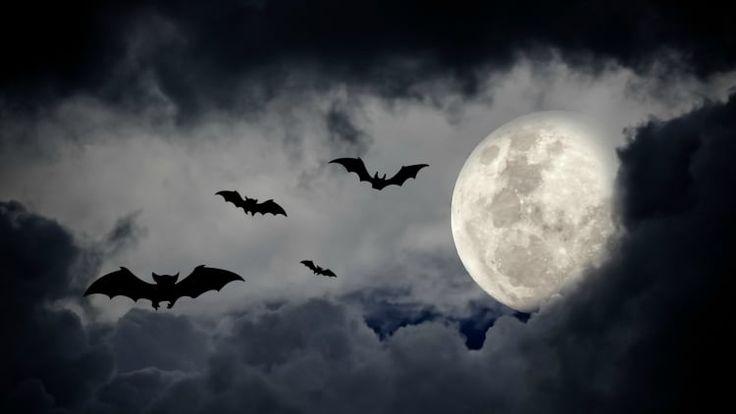 Have a black dress, hot glue and a couple minutes? Then you've got yourself a super cute bat costume