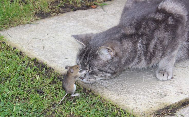 ♥Mice, Cat, Friends, Real Life, The Real, Funny, Into The Wood, Animal, Running Away