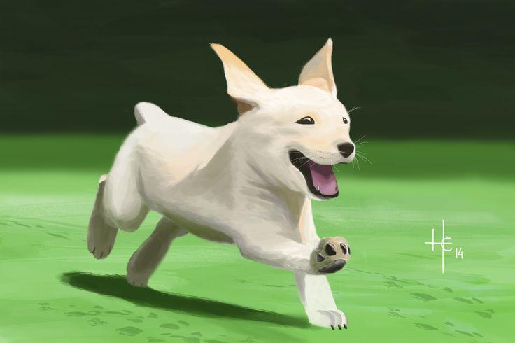 Dog :D