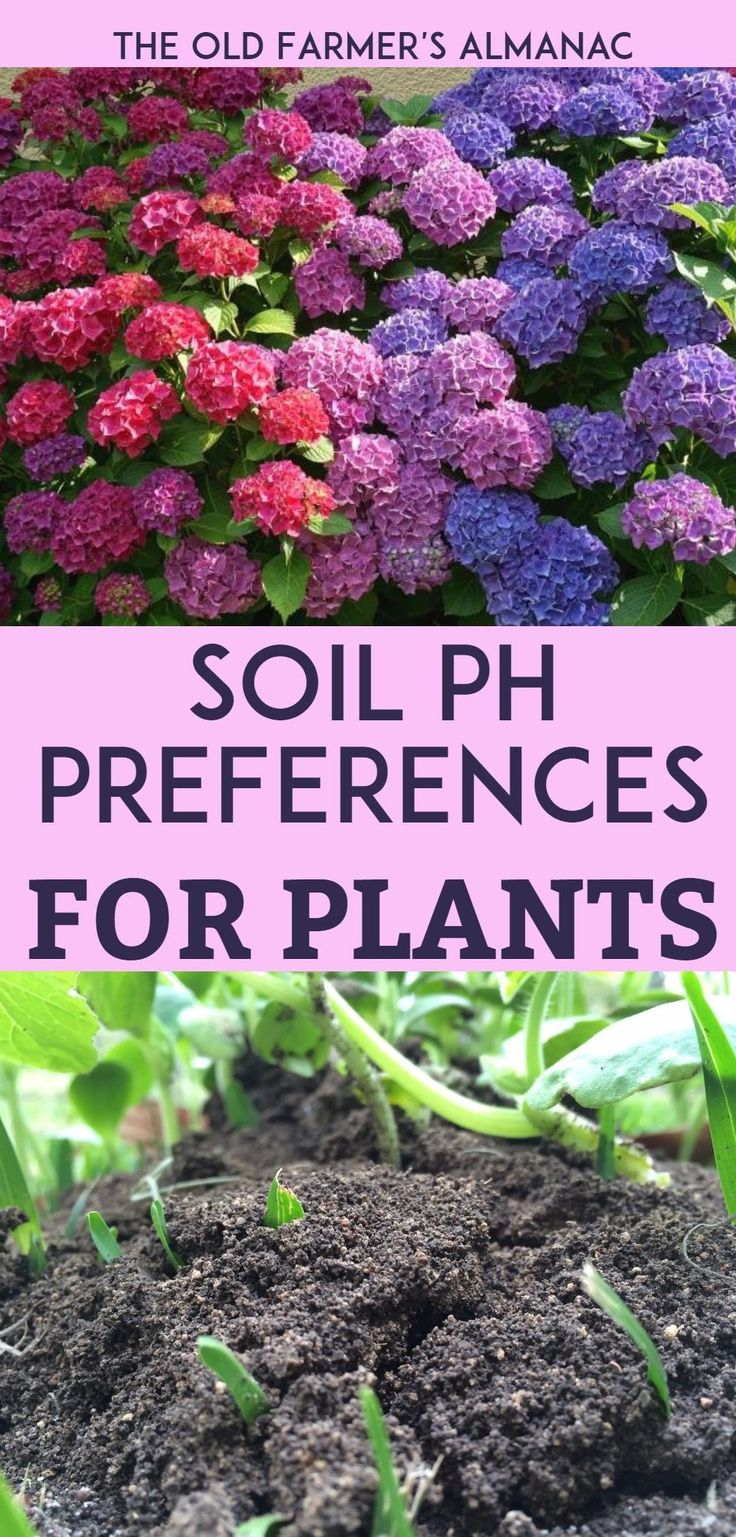 Use our chart to find the proper pH levels for all the plants in your garden! From Almanac.com.
