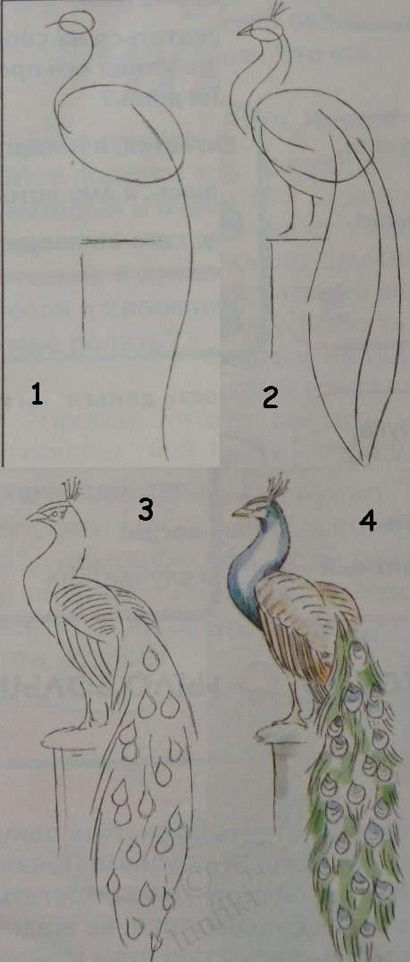 Kids art.  ~Drawing lessons for beginners - A PEACOCK~