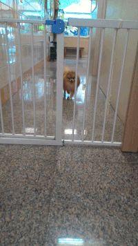 ターミネーターのT-1000の様に柵を通り抜ける犬→海外「可愛い!」|海外まとめネット | 海外の反応まとめブログ