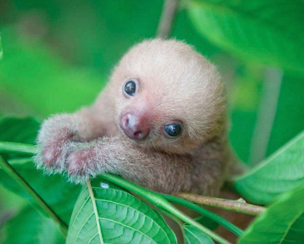 I've tried to keep more sloths from creeping on to this page. I've failed, dismally .....
