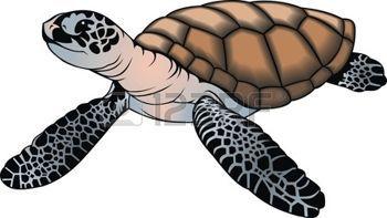 oceaan%3A+leuke+kleine+schildpad+op+een+witte+achtergrond