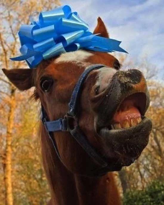 Картинки с лошадками на день рождения