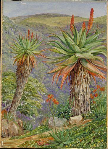http://www.kew.org/mng/gallery/img_large/421.jpg