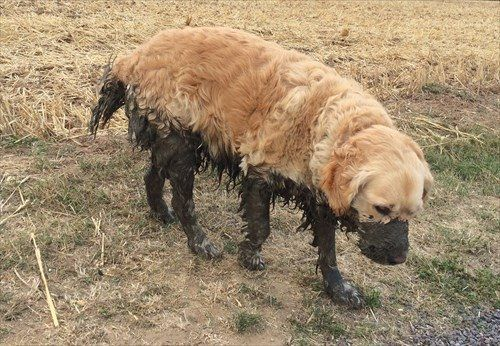Yes, well, I may have gone near some mud along the way...