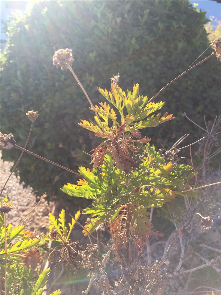 17 best images about 365 une plante par jour on for Plante ornementale