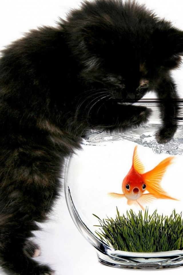 255 best the fish bowl images on pinterest fish tanks for Fish videos for cats