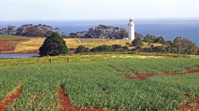 The Table Cape Lighthouse, with tulip bulbs in the foreground.