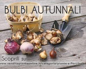 Scopri i Bulbi Autunnali sul nostro negozio online! Crocus, Iris,Tulipani e tanti altri.. http://www.venditapianteonline.it/categoria/piante-e-fiori/bulbi/