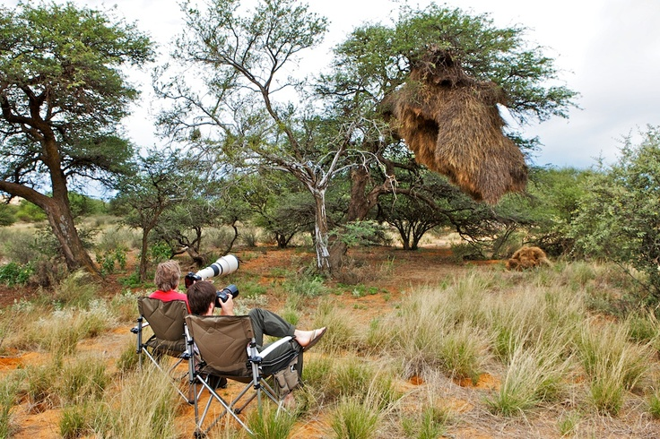 The Nightjar Team hard at work... (Photographing Sociable Weavers in the Northern Cape)