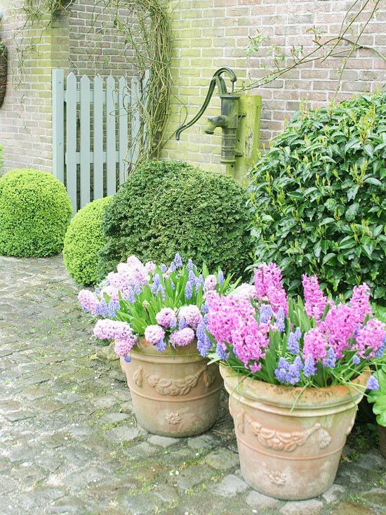 Potted Garden Plants 232 best containers in the garden images on pinterest pot plants gorgeous spring container gardens sweet perfume in your local garden centers look for prechilled bulbs already potted and growing workwithnaturefo