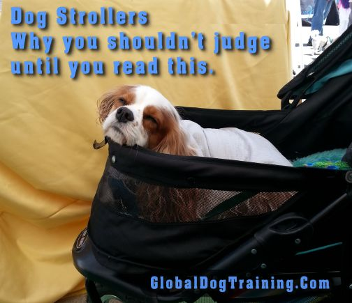 Why would you put your dog in a dog stroller? Shouldn't a dog be walking & getting exercise? I too thought using a dog stroller was a big no-no. Read why I changed my ways.