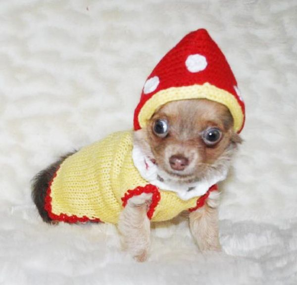 7 best Dog Costumes - adogfashion.com images on Pinterest ...