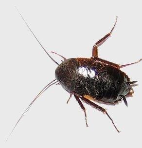 Als een kakkerlak wordt geplet zal hij zijn eitjes losl aten en verspreid daarmee nakomelingen. Binnen journalistiek werkt het net zo; hoe meer het onderdrukt wordt, hoe harder de journalist zal proberen de informatie naar buiten te krijgen.