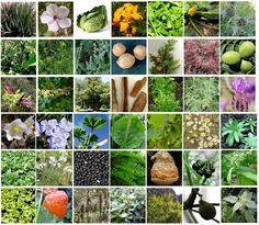 Depuis des décennies, plusieurs recherches ont été effectuées pour trouver des traitements efficaces pour lutter contre le cancer. Des milliers de recherches ont été effectuées sur des plantes pour extraire des agents anti-cancer. Rappelons qu'à travers les âges et les civilisations, les plantes ont traité plusieurs maladies dont le cancer. Cette liste représente des espèces …