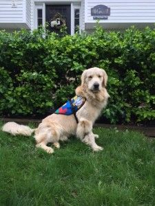 Service Dogs by Warren Retrievers Delivers Autism Service Dog to Child in  Denville, NJ