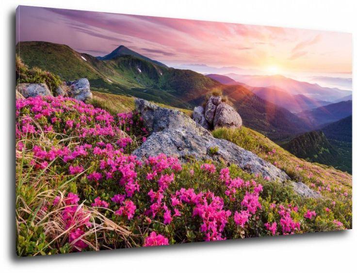 krajobraz z kwiatami w górach