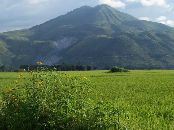 Pangururan, Samosir, Lake Toba, Indonesia. Peaceful paddy fields with Mount Pusuk Buhit at the background.