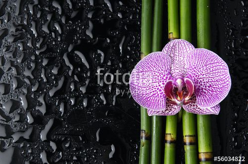 orchid with bamboo grove on wet black background