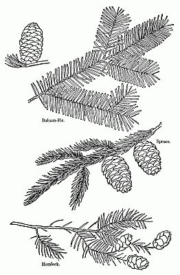 56 best plant identification images on pinterest plant evergreen id ccuart Choice Image