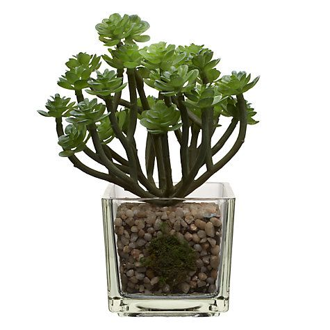 13 best faux flowers images on pinterest artificial flowers fake buy house by john lewis artificial mini echeveria with stalks h15cm online at johnlewis mightylinksfo