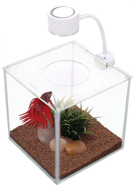 Best 25 small fish tanks ideas on pinterest freshwater for Betta fish supplies