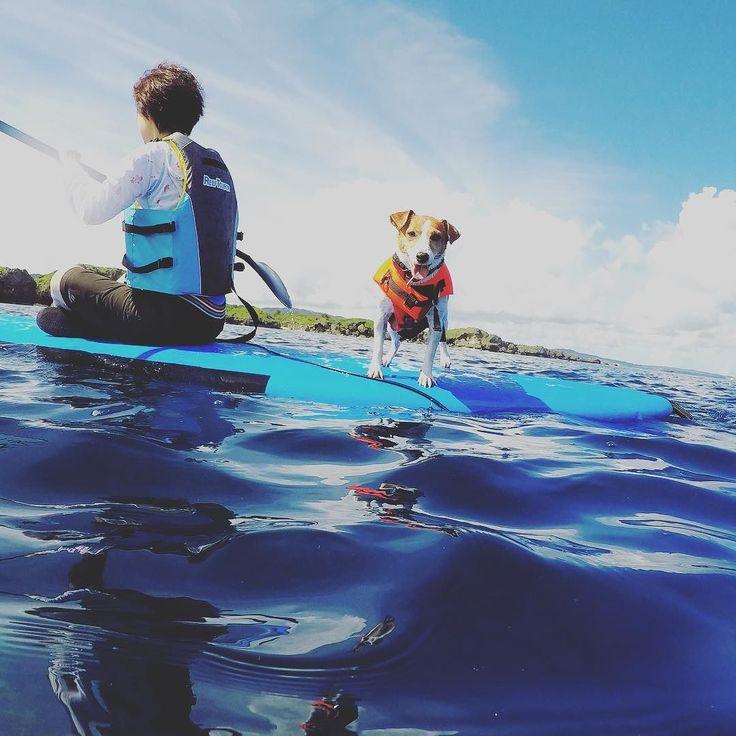 夏休み 愛犬と一緒にSUP いざ沖縄の海でSUP 良い思い出をお作りします #seanasurf #okinawa #sup #dog #supdogs #sea#beautiful #fun #family #沖縄 #海 #愛犬 #愛犬とsup #綺麗な海 #楽しい #思い出 #夏 #夏休み #夏休みは沖縄 #シーナサーフ #夏の思い出